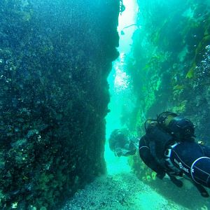 Scuba Diving/Freediving in Cape town