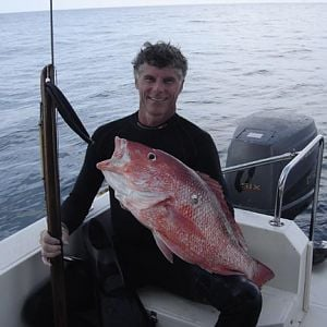 Freedive Red Snapper Copy
