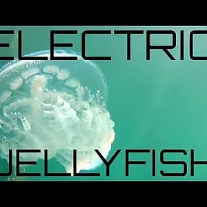 Electric Jellyfish Stunning Display - YouTube
